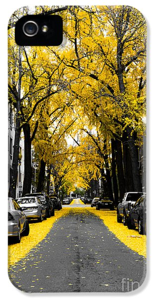 Yellow Gingko Trees In Washington Dc IPhone 5 Case by Paul Frederiksen