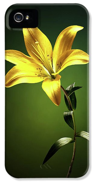 Lily iPhone 5 Case - Yellow Lilly With Stem by Johan Swanepoel