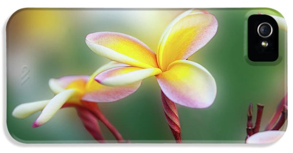 Yellow Pastel Plumeria IPhone 5 Case by Sean Davey
