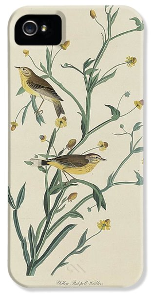 Yellow Red-poll Warbler IPhone 5 Case