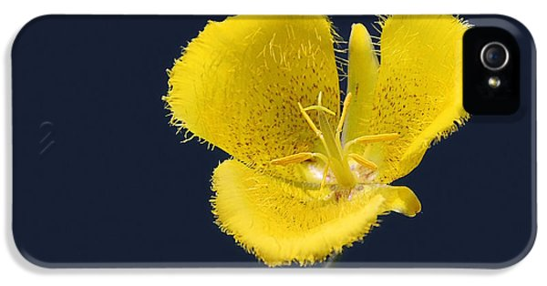 Yellow Star Tulip - Calochortus Monophyllus IPhone 5 Case by Christine Till
