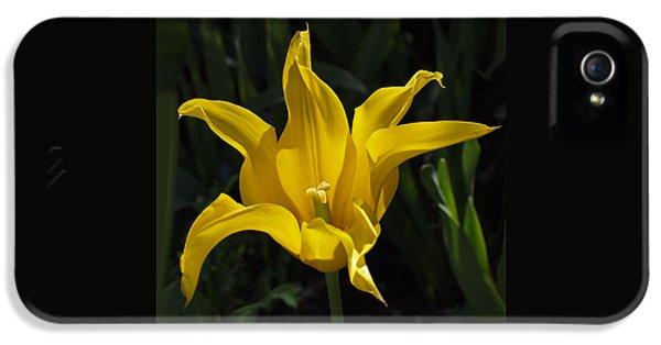 Yellow Star Tulip IPhone 5 Case