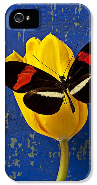 Yellow Tulip With Orange And Black Butterfly IPhone 5 Case by Garry Gay