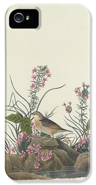 Yellow-winged Sparrow IPhone 5 Case by Rob Dreyer