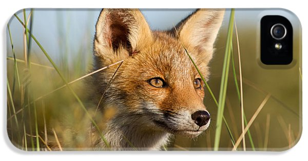 Young And Eager - Red Fox Kit IPhone 5 Case