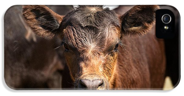 Young Angus IPhone 5 Case by Todd Klassy