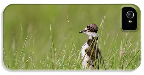 Killdeer iPhone 5 Case - Young Killdeer In Grass by Mark Duffy