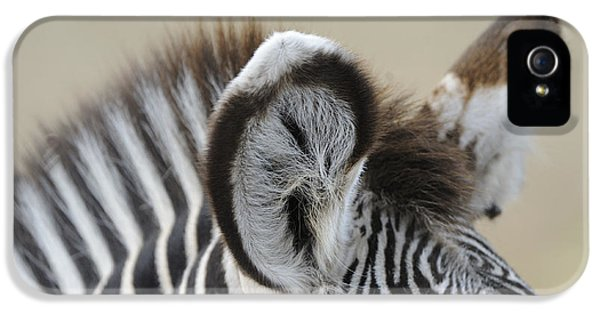 Zebra Ears IPhone 5 Case by David & Micha Sheldon