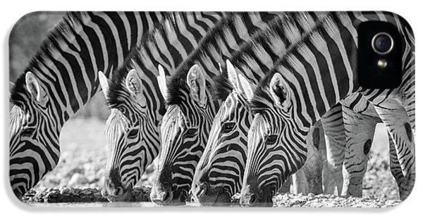 Zebras Drinking IPhone 5 Case by Inge Johnsson