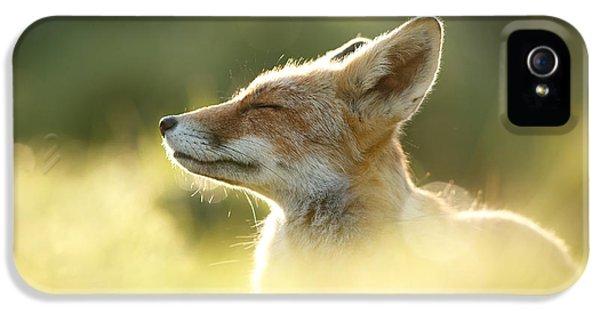 Zen Fox Series - Zen Fox Up Close IPhone 5 Case by Roeselien Raimond