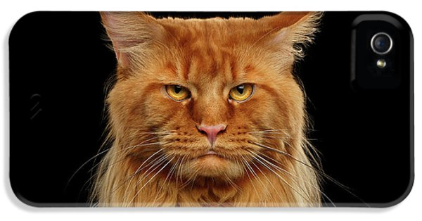 Cat iPhone 5 Case - Angry Ginger Maine Coon Cat Gazing On Black Background by Sergey Taran