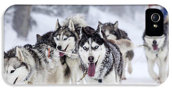 Breathe iPhone 5 Case - Dog-sledding With Huskies by Melinda Nagy