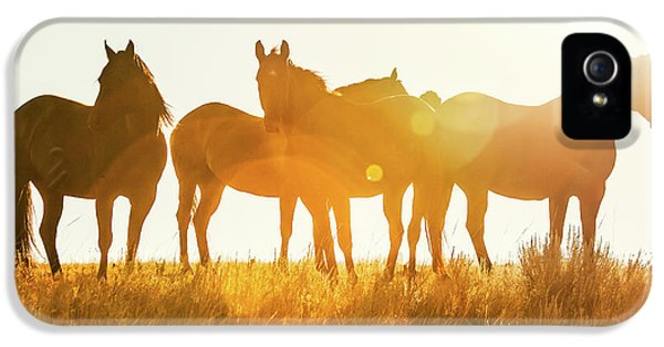 Horse iPhone 5 Case - Equine Glow by Todd Klassy