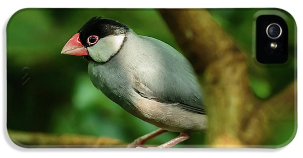 Java Sparrow iPhone 5 Cases | Fine Art America