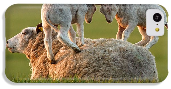Leap Sheeping Lambs IPhone 5c Case by Roeselien Raimond