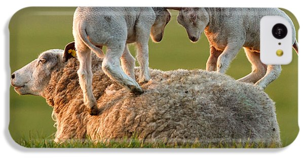 Sheep iPhone 5c Case -  Leap Sheeping Lambs by Roeselien Raimond