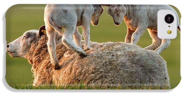 Leap Sheeping Lambs IPhone 5c Case