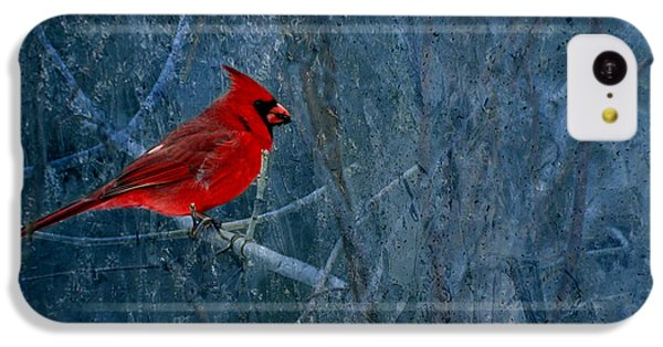 Northern Cardinal IPhone 5c Case by Thomas Young