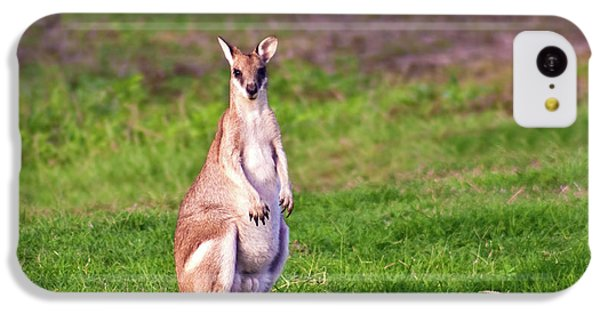 A Male Grey Kangaroos (macropus IPhone 5c Case