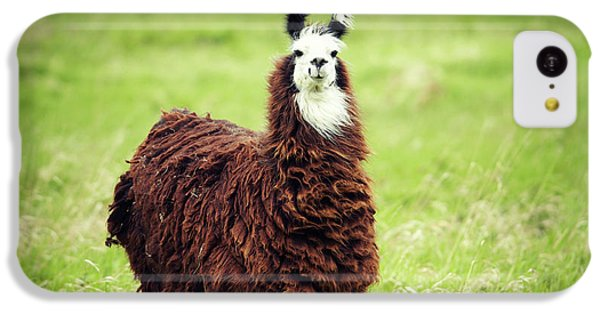 Llama iPhone 5c Case - An Alpaca Vicugna Pacos Poses by Todd Korol