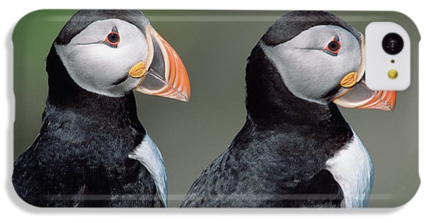 Atlantic Puffins In Breeding Colors IPhone 5c Case by Yva Momatiuk and John Eastcott