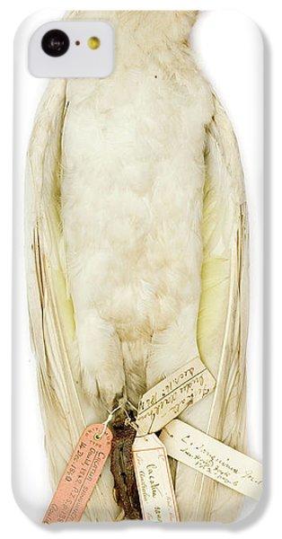 Cockatoo iPhone 5c Case - Cacatua Sanguinea by Natural History Museum, London