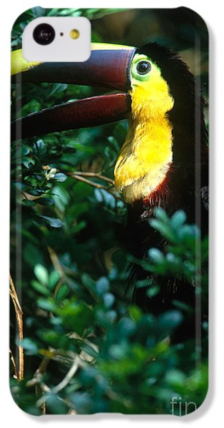 Chestnut-mandibled Toucan IPhone 5c Case by Art Wolfe