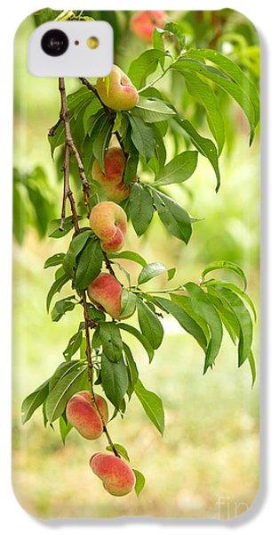 Donut Peaches IPhone 5c Case by Iris Richardson