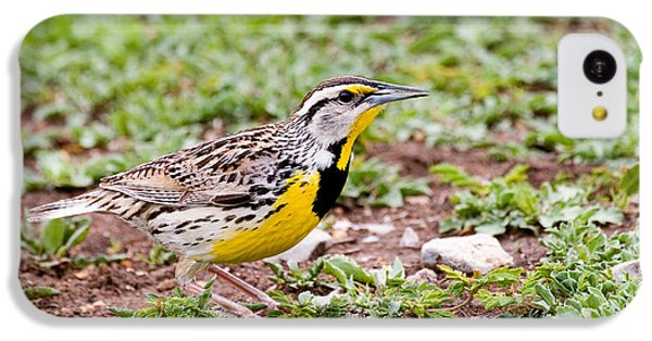 Eastern Meadowlark Sturnella Magna IPhone 5c Case