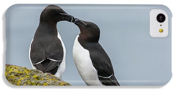 Europe, Iceland, Latrabjarg IPhone 5c Case