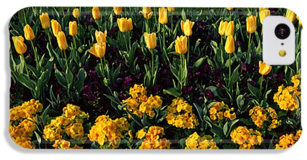 Flowers In Hyde Park, City IPhone 5c Case
