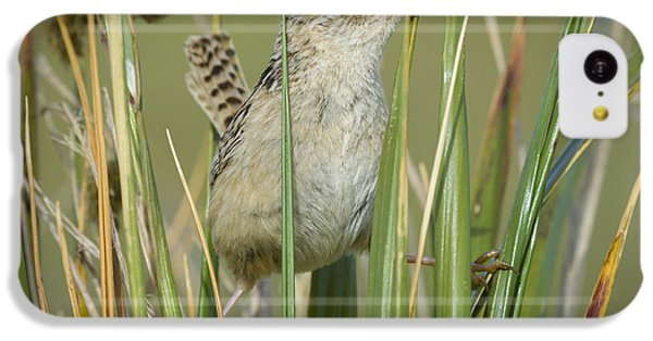 Grass Wren IPhone 5c Case