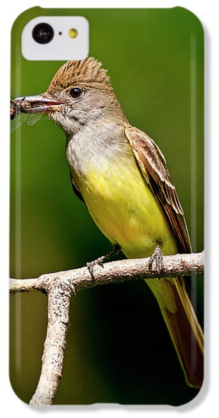 Flycatcher iPhone 5c Case - Great Crested Flycatcher Myiarchus by David Northcott