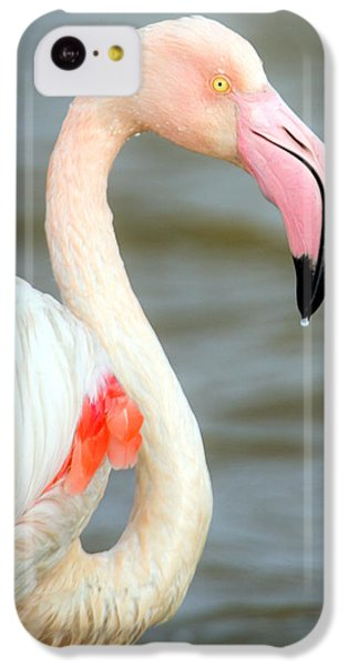 Greater Flamingo Phoenicopterus Roseus IPhone 5c Case by Panoramic Images