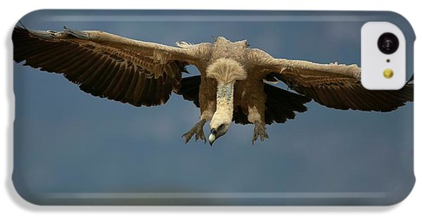 Griffon iPhone 5c Case - Griffon Vulture Flying by Nicolas Reusens