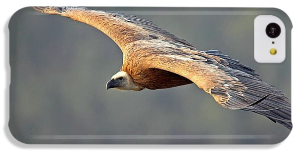 Griffon Vulture In Flight IPhone 5c Case by Bildagentur-online/mcphoto-schaef
