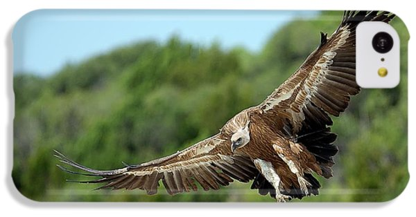 Griffon iPhone 5c Case - Griffon Vulture by Nicolas Reusens