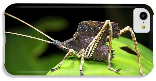 Leaf Mimic Bush-cricket IPhone 5c Case by Dr Morley Read
