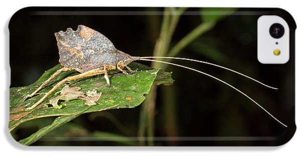 Leaf Mimic Katydid IPhone 5c Case by Dr Morley Read