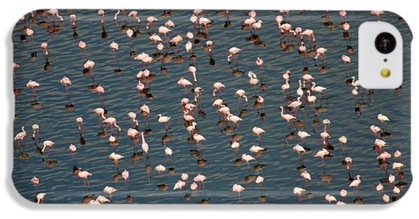 Lesser Flamingo, Lake Nakuru, Kenya IPhone 5c Case by Panoramic Images