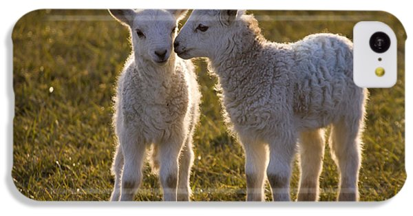 Sheep iPhone 5c Case - Little Gossips by Angel Ciesniarska