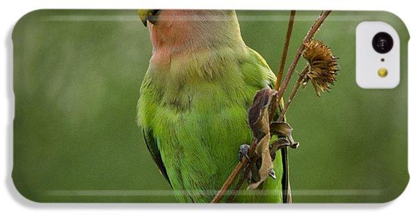 Lovely Little Lovebird  IPhone 5c Case by Saija  Lehtonen