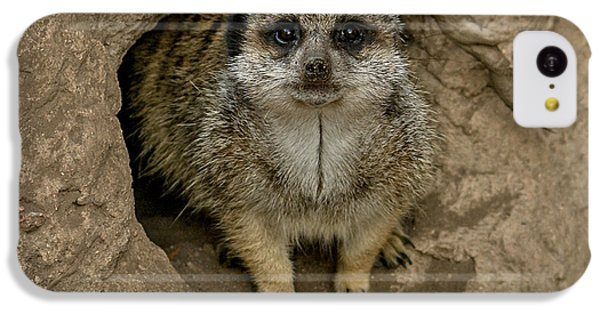 Meerkat IPhone 5c Case