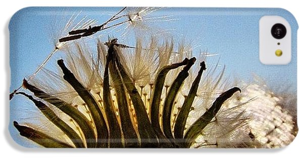 Sky iPhone 5c Case - #mgmarts #dandelion by Marianna Mills