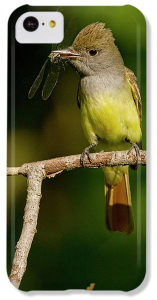 Flycatcher iPhone 5c Case - North America, Usa, Central by Joe and Mary Ann Mcdonald