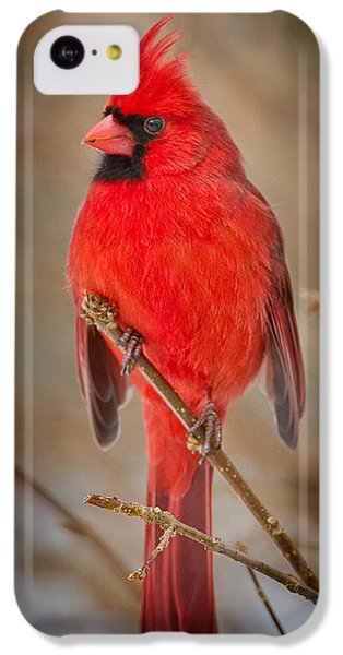 Northern Cardinal IPhone 5c Case by Bill Wakeley