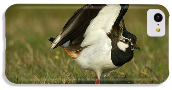Lapwing iPhone 5c Case - Northern Lapwing by Helmut Pieper