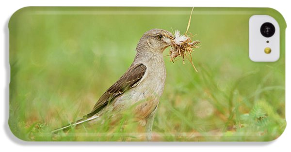 Mockingbird iPhone 5c Case - Northern Mockingbird (mimus Polyglottos by Larry Ditto