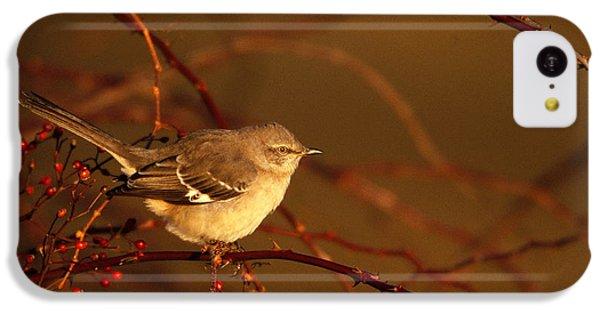 Northern Mockingbird Mimus Polyglottos IPhone 5c Case by Paul J. Fusco