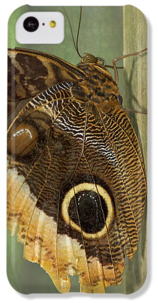 Belize iPhone 5c Case - Owl-eye Butterfly (caligo by William Sutton